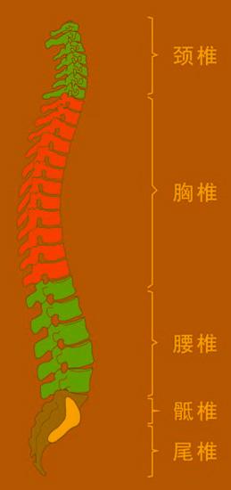 简单的腰突自测方法,腰疼的你赶快测试一下!